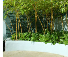 The use of bamboo adds an exotic feel to this urban courtyard in Dublin.